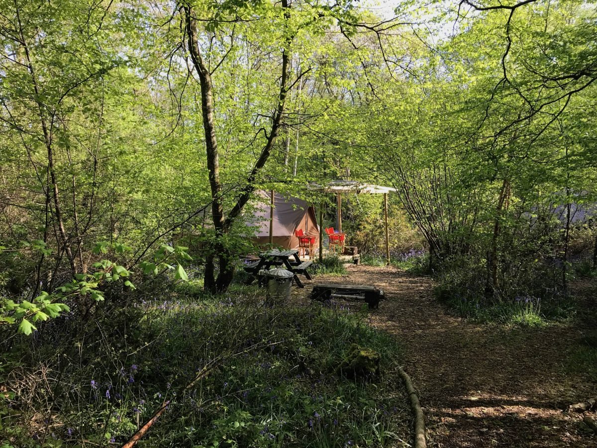 Eco Camp at Wild Boar Wood