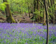 Eco Camp at Wild Boar Wood , Horsted Keynes, West Sussex | Head Outside